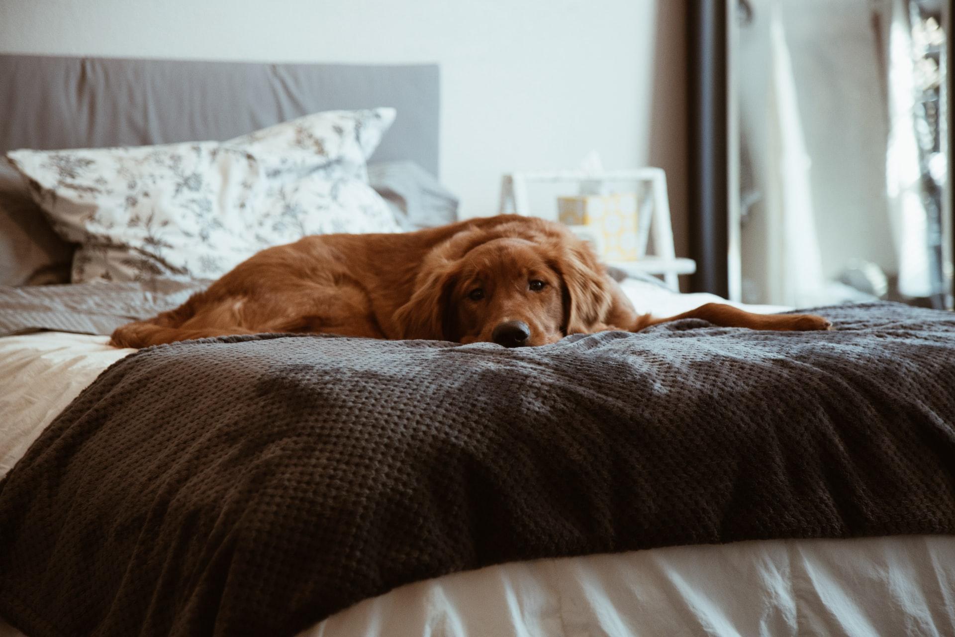 眠りたいのに眠れない不眠4パターン